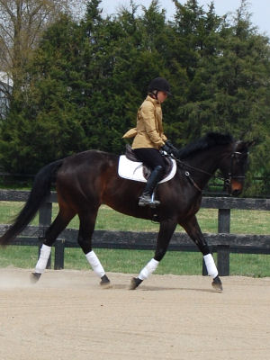 Speedy Bandini - Horse for Sale