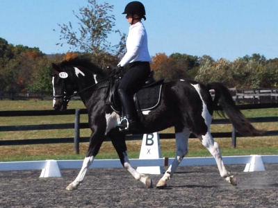 students that  are sweeping the Warrenton Dressage Show Series